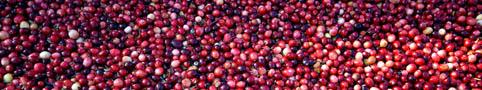 cranberry01.jpg